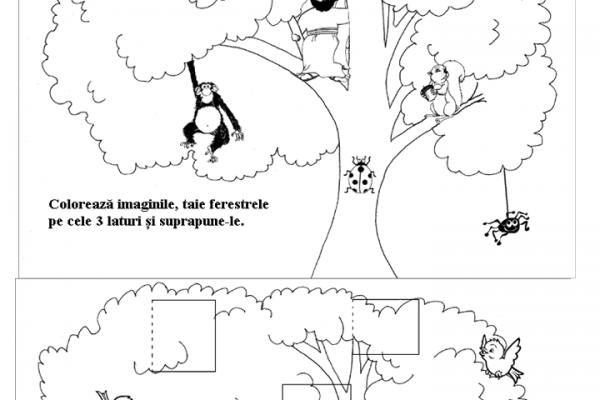 zaheu-copac-cu-ferestre3EBF7B51-DBD6-0E1C-2230-9F816BBDDBAD.png